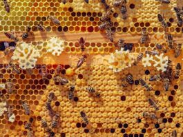 Muzeum Pszczelarstwa